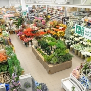 dział florystyka