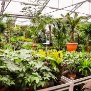 rośliny-wew3