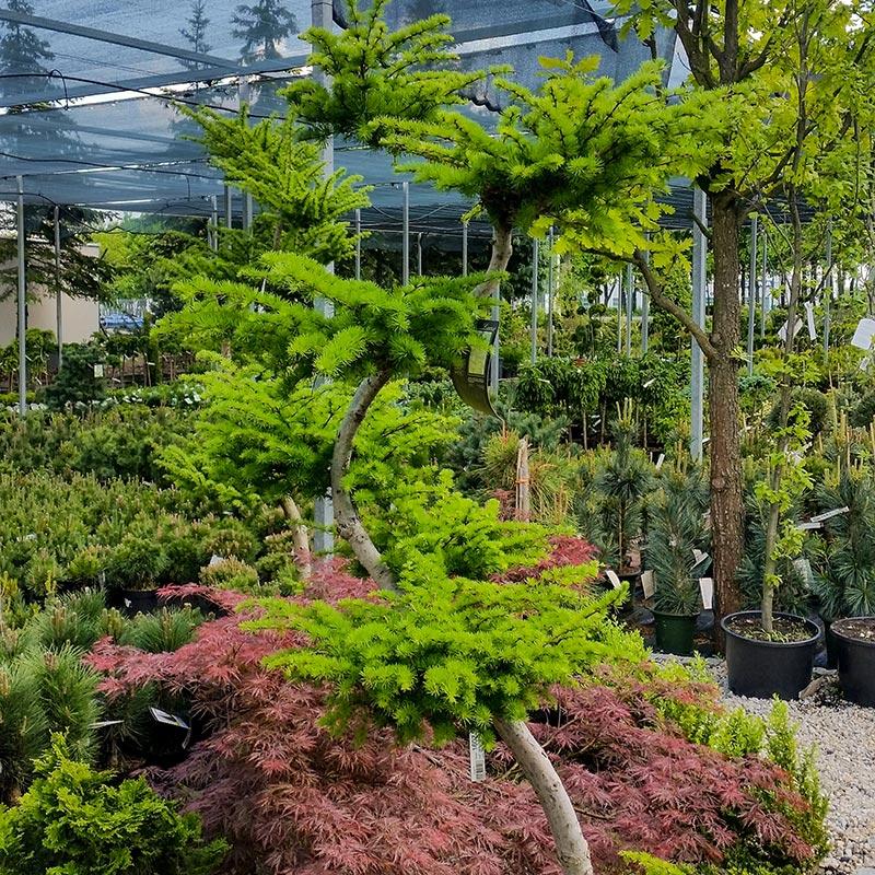 rabatowe, byliny, krzewy, trawy, bukszpany, rośliny zielone, kwiaty, jucca, centrum ogrodnicze, tarnowo podgórne, poznań