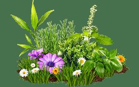 #rabatowe #byliny #krzewy #trawy #bukszpany #roślinyzielone #kwitnące #kwiaty #poradyogrodnicze #jucca #centrumogrodnicze #tarnowopodgórne #poznań