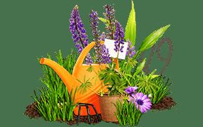 Jucca. Porady ogrodnicze