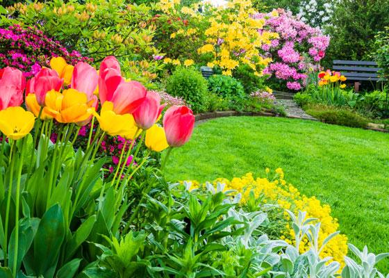 porady, porady ogrodnicze, maj, wiosna, ochrona, przesadzanie, wysiew, rośliny, ogród, dobrerady, centrumogrodnicze, ogrodnik, jucca, tarnowo podgórne, poznań