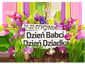 dzień babci, dzień dziadka, kwiaty, jucca