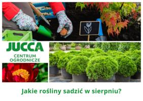 Jakie rośliny sadzić w sierpniu?