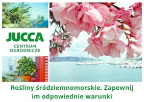 Rośliny śródziemnomorskie. Zapewnij im odpowiednie warunki