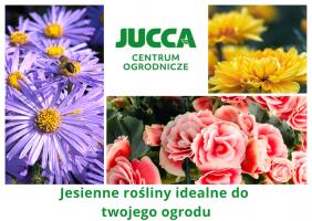 Jesienne rośliny idealne do twojego ogrodu