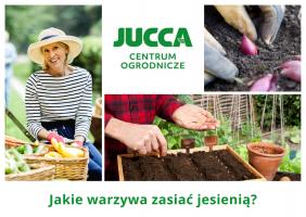 Jakie warzywa zasiać jesienią?