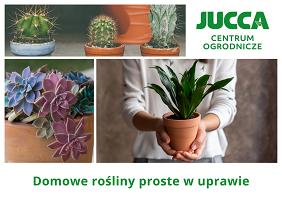 Domowe rośliny proste w uprawie