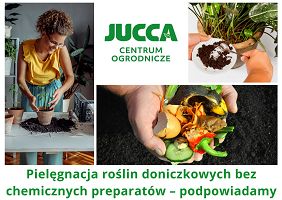Pielęgnacja roślin doniczkowych bez chemicznych preparatów – podpowiadamy