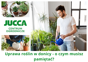 Uprawa roślin w donicy - o czym musisz pamiętać?