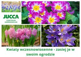 Kwiaty wczesnowiosenne – zasiej je w swoim ogrodzie