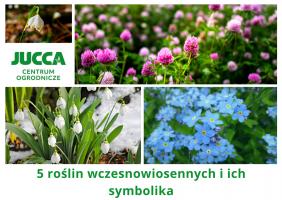 5 roślin wczesnowiosennych i ich symbolika