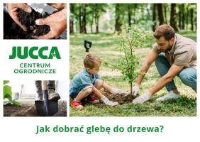 Jak dobrać glebę do drzewa?