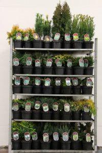 Coniferen in cultivars wys: Leverbaar don: C2.5 30497